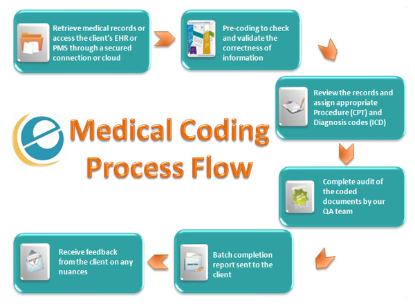 a visual guide to medical coding | top medical coding schools, Human body